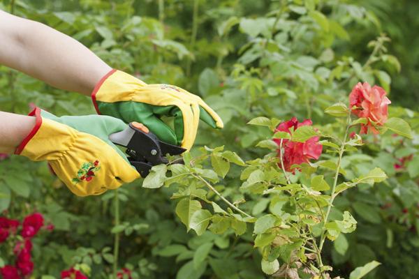 Mantenimiento De Jardines Y Comunidades